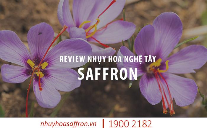 review nhụy hoa nghệ tây saffron