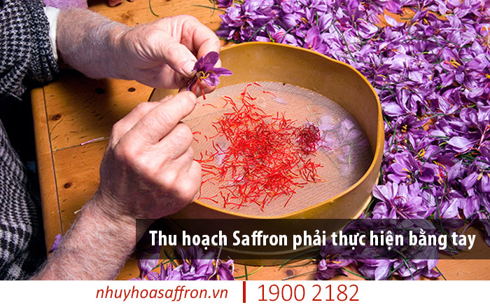 review saffron