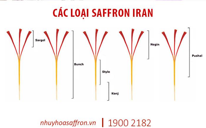 saffron là gì