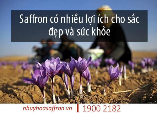 saffron xuất xứ