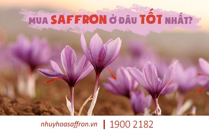 mua saffron ở đâu tốt