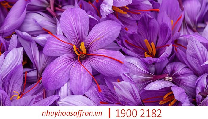 cach nhan biet nhuy hoa nghe tay saffron chinh hang 2